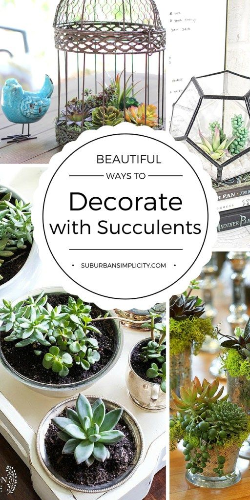 Succulents are so easy to decorate with. Whether live or faux, they add such charm and style to your indoor or outdoor decor. Come be inspired by these Beautiful Ways to Decorate with Succulents | Succulent DIY