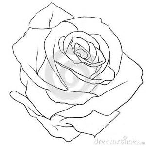 Image Result For Drawing A Realistic Rose Buds Rose Outline Rose Drawing Roses Drawing