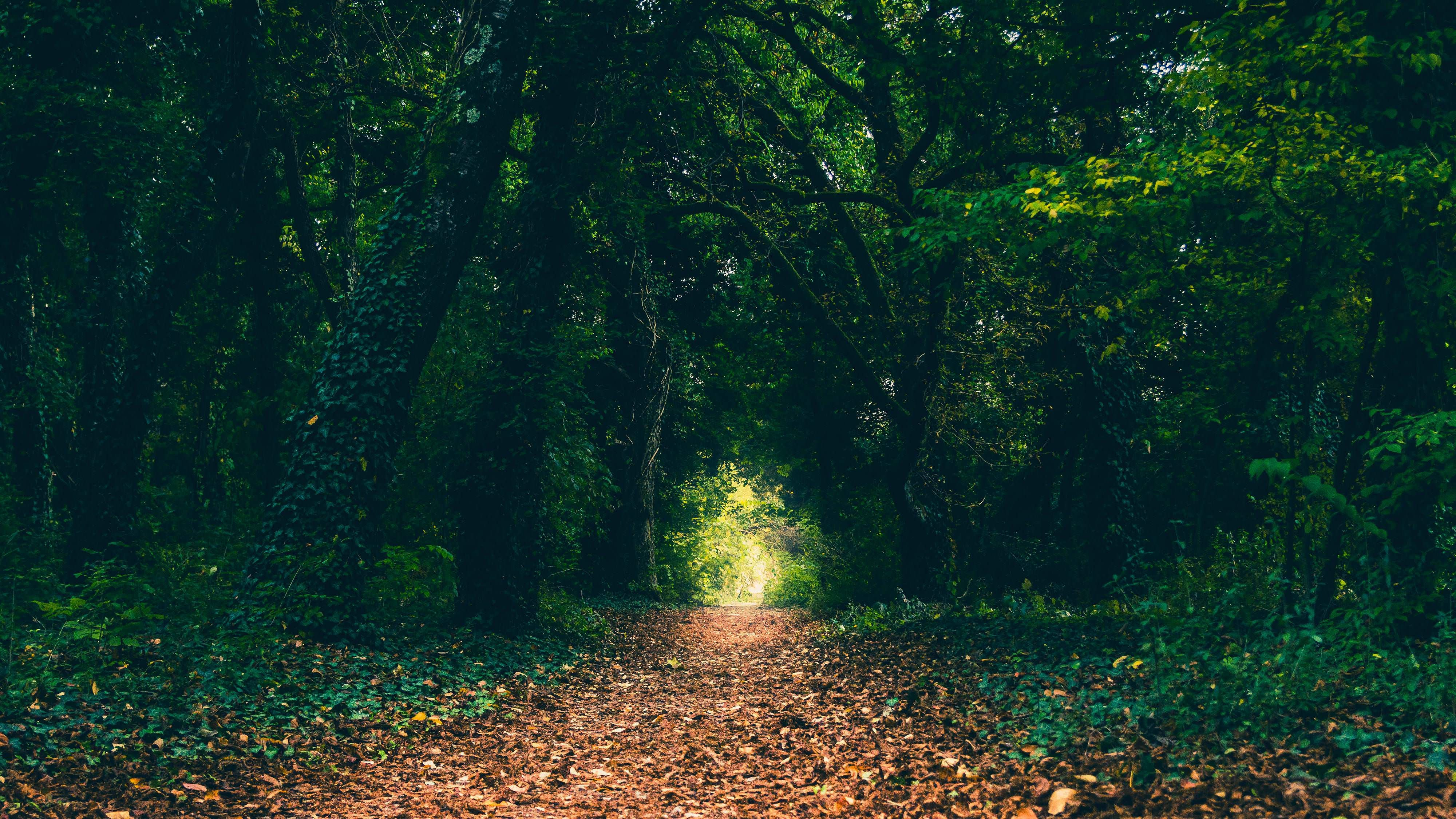 A Certain Magical Forest [40002250] Hdwallpaper