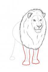 Resultado de imagem para leão desenho png