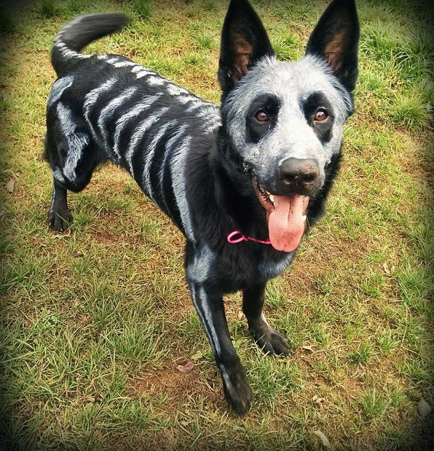 dueos de mascotas usan pintura no txica para convertir a sus animales en espeluznantes esqueletos para halloween - Dog Halloween Ideas