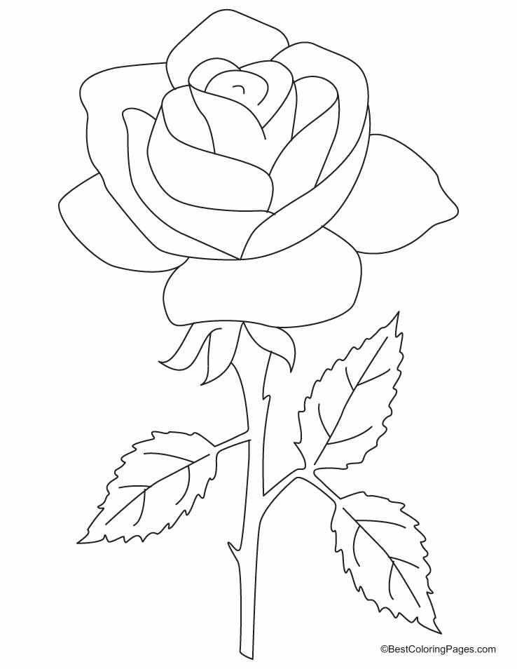 A beautiful rose with three petals coloring pages Download Free