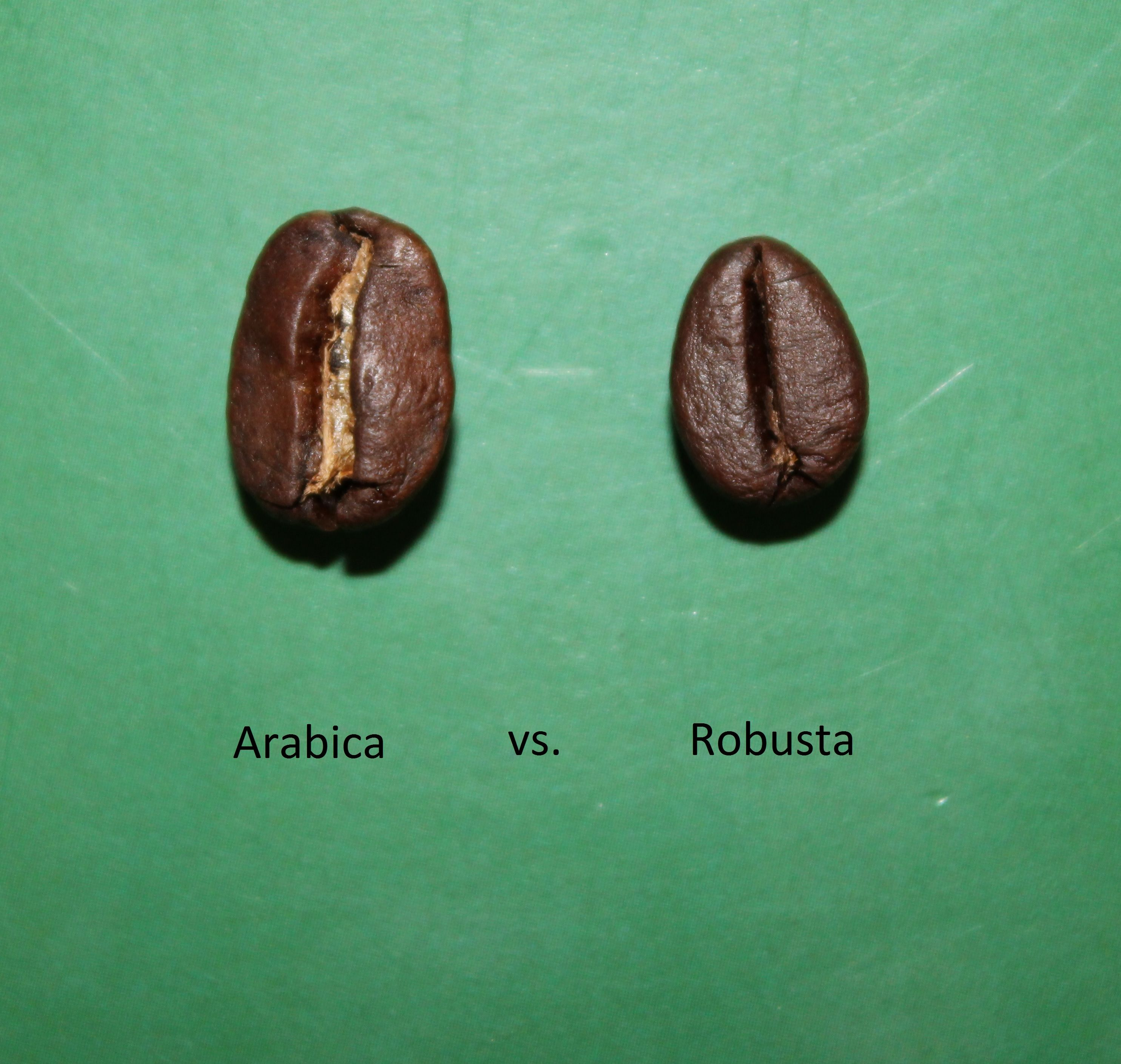 Robusta Vs Arabica Light Coffee In 2018 Pinterest Kopi Organik By Teungku Aceh Nad Type I Love Italian Roasting