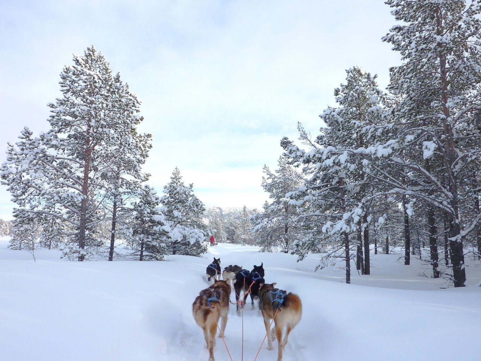 Huskey tocht, Engholm husky, husky, bergen, Noorwegen, sneeuw,