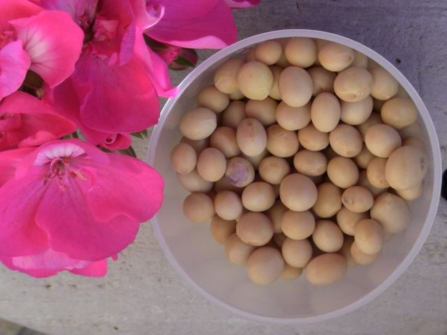 Chinese Women's Beauty Secret: Homemade Soymilk