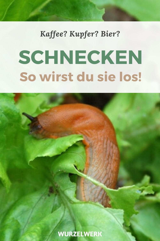 Das Hilft Wirklich Gegen Schnecken Und Nacktschnecken Wurzelwerk In 2021 Schnecken Im Garten Nacktschnecken Schnecken