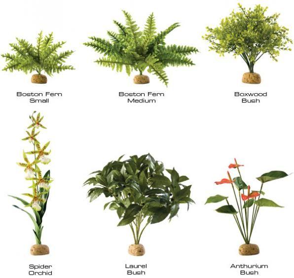 tropical rainforest houseplants | Rainforest plants ... on