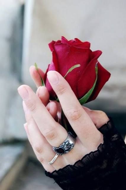 Pin By Asna Siya On Islamic Dpz Red Roses Love Rose Beautiful Rose Flowers