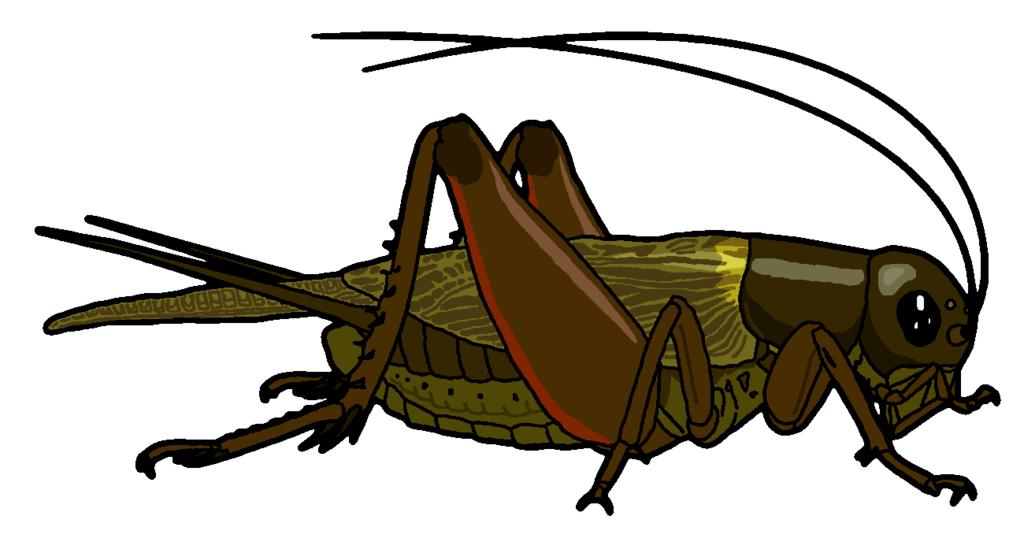 Insect Cricket Clipart Insect Clipart Cricket Insect Clip Art