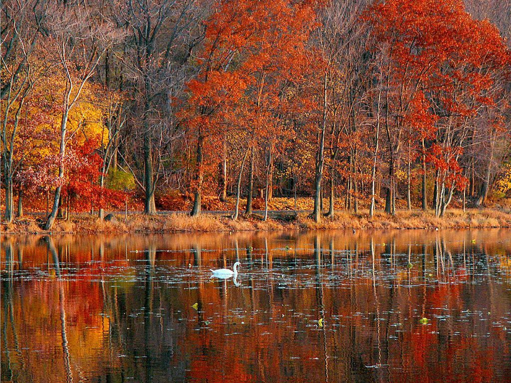 Fall Scenes Wallpaper And Screensavers Autumn Splendor