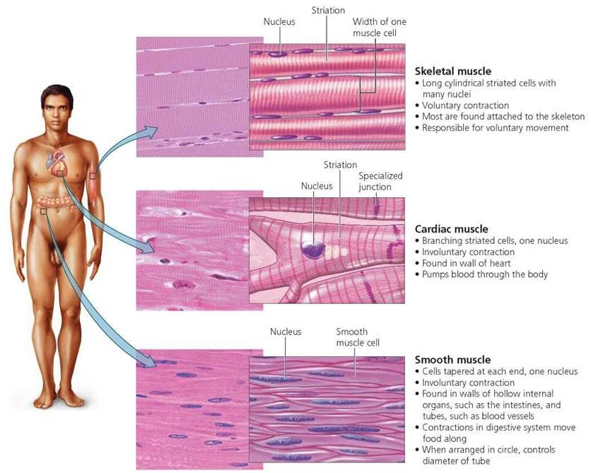 Body Organization and Homeostasis - Biology of Humans | NP | Pinterest