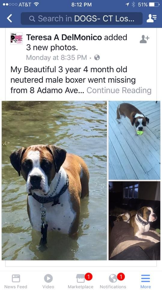 Reunited In Oakdale Pets Male Boxers Dogs