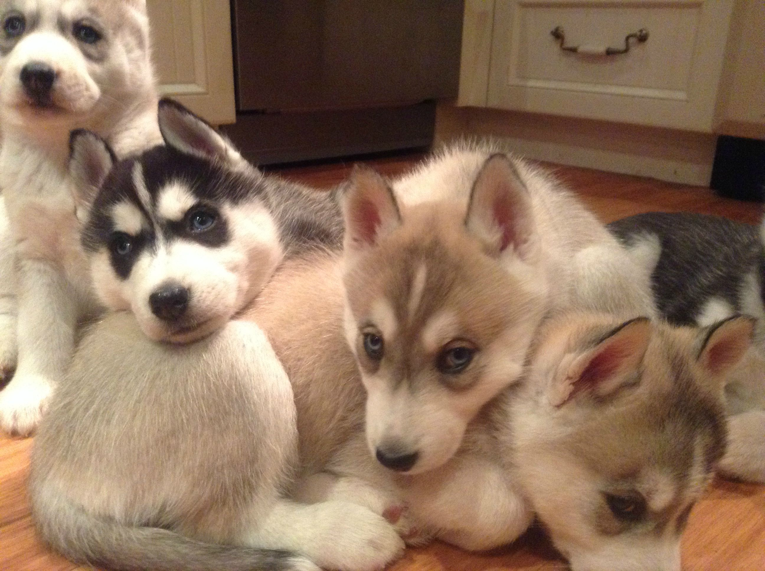 A Pile Of Puppies For This Day Cute Animals Puppies Puppies
