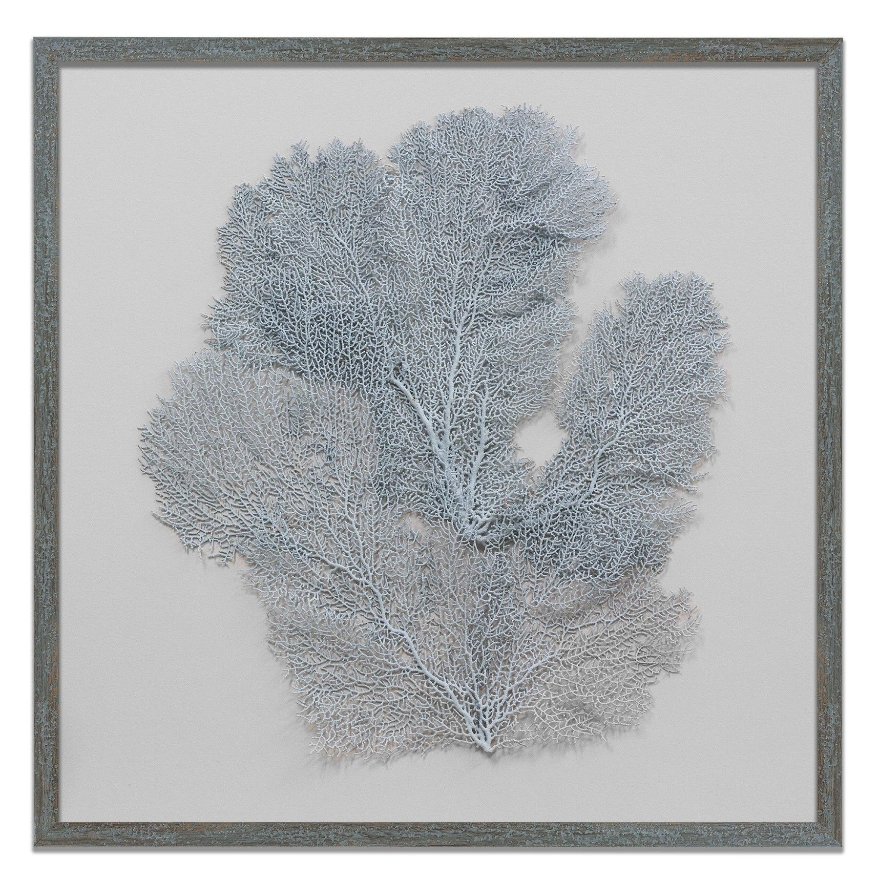 """Blue Haze Framed Sea Fan - 24"""" x 24"""" from The Well Appointed House"""
