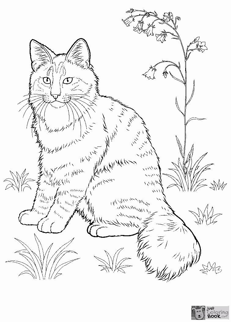 Pin On Cat Coloring Pages