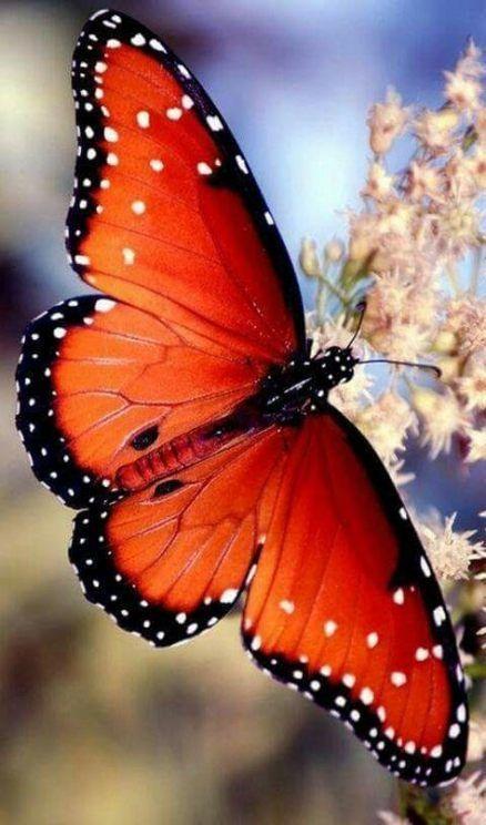 50+ Ideas Flowers Orange Beautiful Butterflies For 2019 #flowers