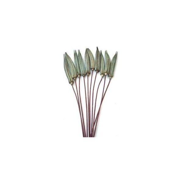 Okra Pods - Basil Green - Stemmed - 3 bunches - Price: $15.99 : Dried... (211.110 IDR) ❤ liked on Polyvore featuring home, home decor, floral decor, flowers, flores, decor, garden, green home decor, flower home decor and flower stems