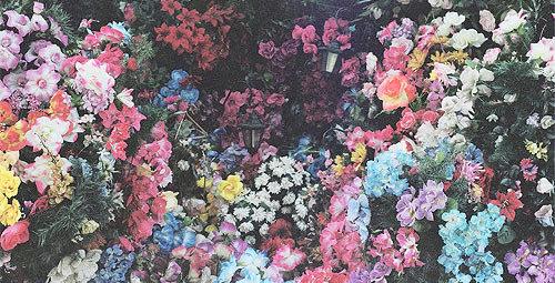 Flores Tumblr Buscar Con Google Flowers Pinterest Flowers