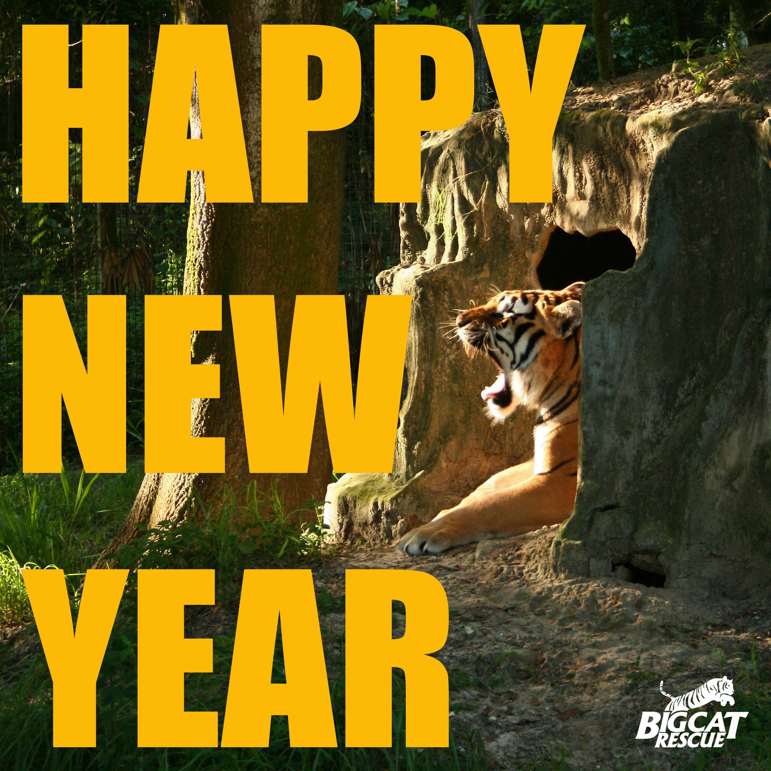 Thanks to our supporters around the world for making 2012 a roaring success FOR the animals! We can't wait to get our teeth into 2013! :) HAPPY NEW YEAR!!