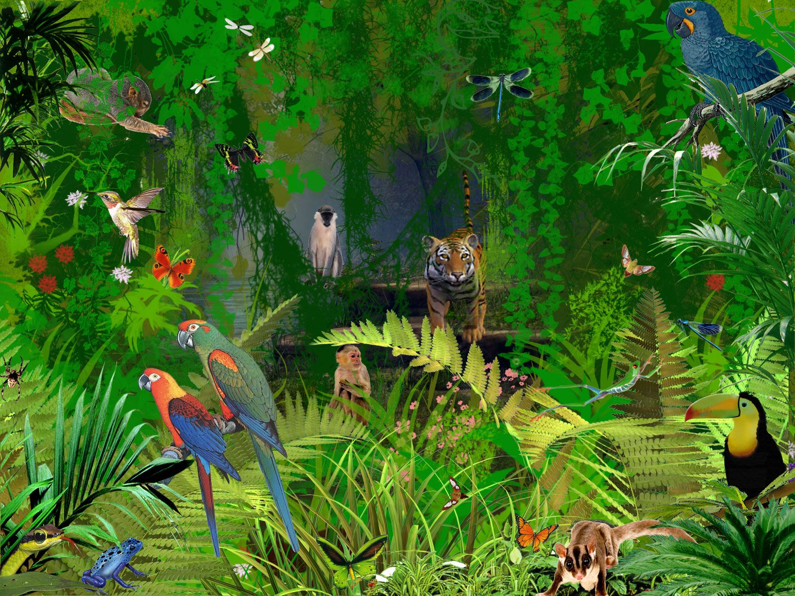 rainforest animal wallpaper pictures - photo #11