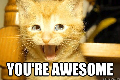 You Re Awesome Funny Memes : You re awesome quotes urawesome cat