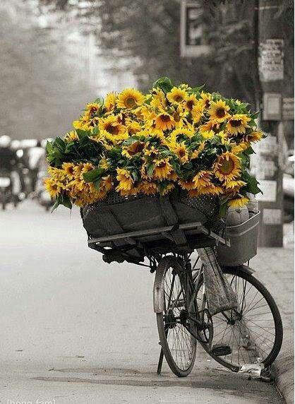 Uma Bicicleta De Flores Pra Voce Flores Bonitas Flores Do