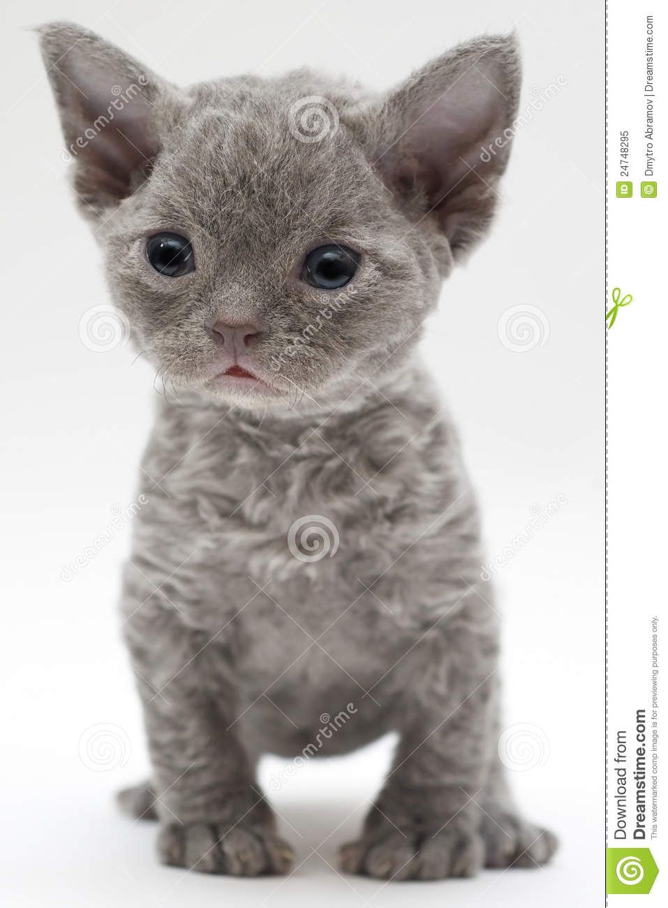 Top 5 Sweet Little Tiny Cats Breeds