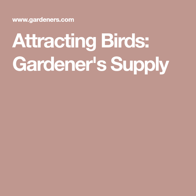 Attracting Birds To Your Landscape