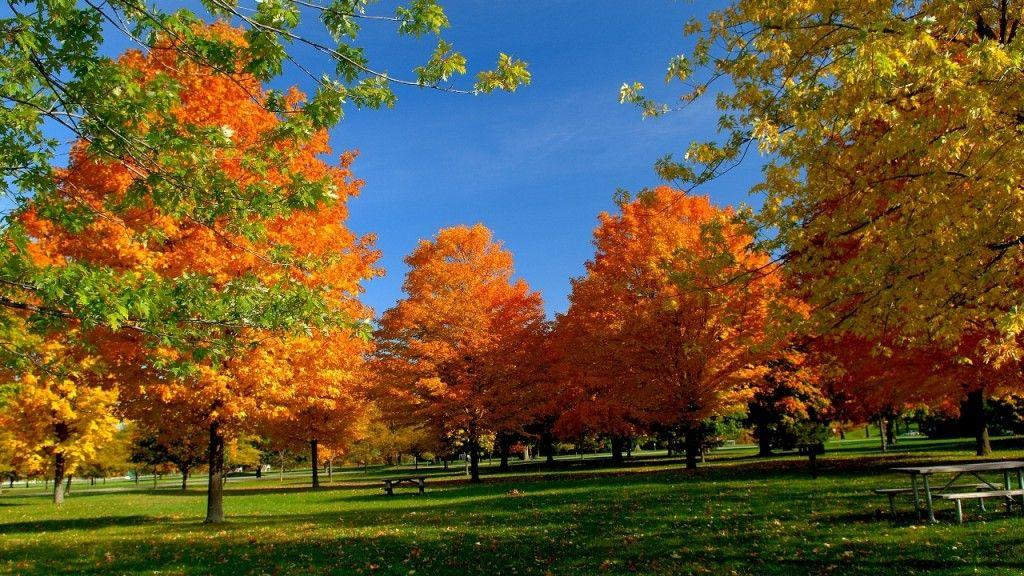 Best Cool High Definition Wallpapers Nature Wallpaper Autumn Landscape Tree Hd Wallpaper