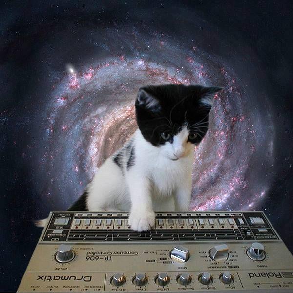 #catsonsynthesizersinspace #TR606 #RolandDrumMachine
