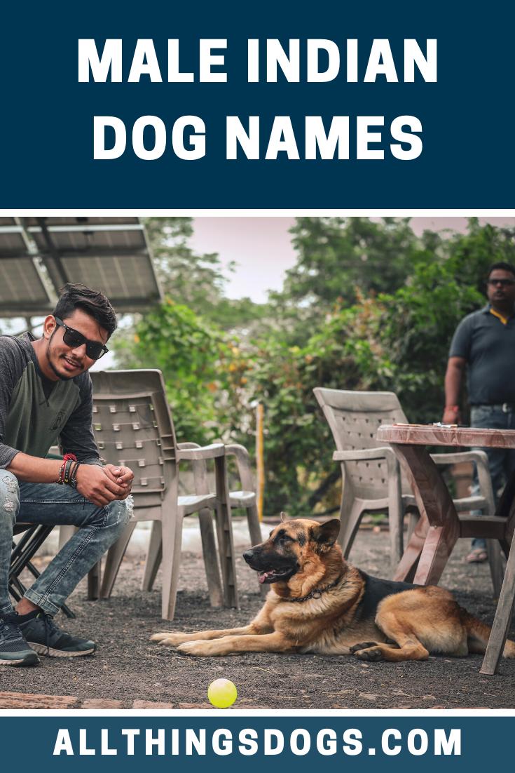 Male Indian Dog Names Dog Names Dog Names Male Dogs