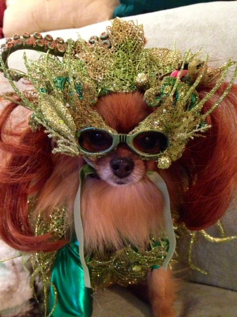 Sophia Loren as Poison Ivy : poison ivy dog costume  - Germanpascual.Com