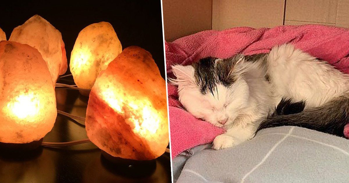 Pin on Salt Lamps Dangerous To Cats and Dogs