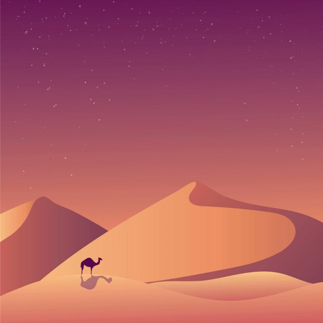 Desert Camels Dunes