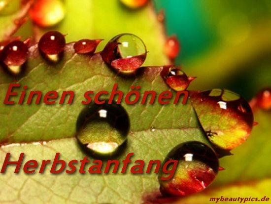 Herbstanfang | Sprüche | Pinterest | Macro Photography