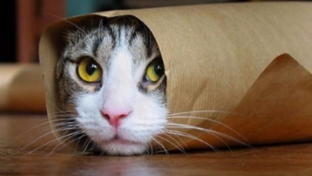 5 razones por las que tener gatos como mascota es bueno para la salud