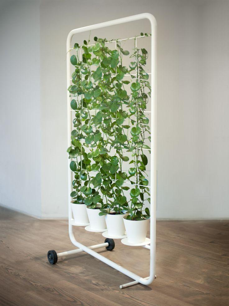 Un rideau végétal en 2020   Planter des tomates cerises ...