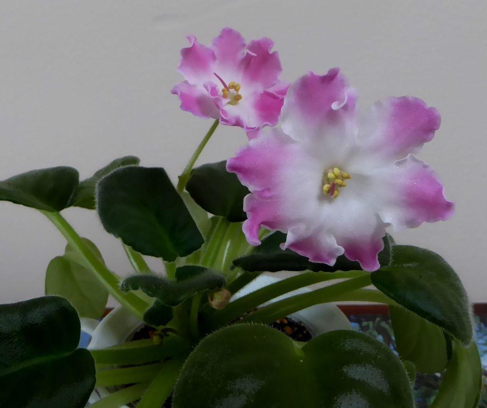 in Casa y jardín, Patio, jardín y espacios abiertos, Plantas, semillas y bulbos
