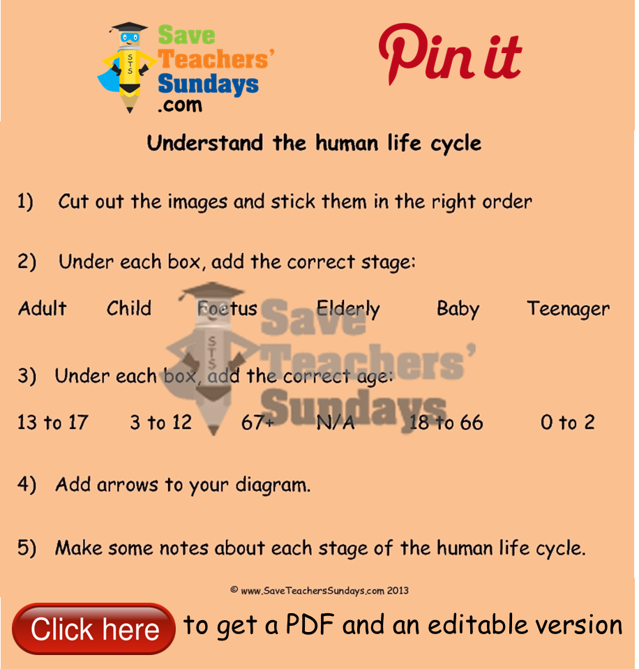 Human life cycle worksheet. Go to (url) to download this ...
