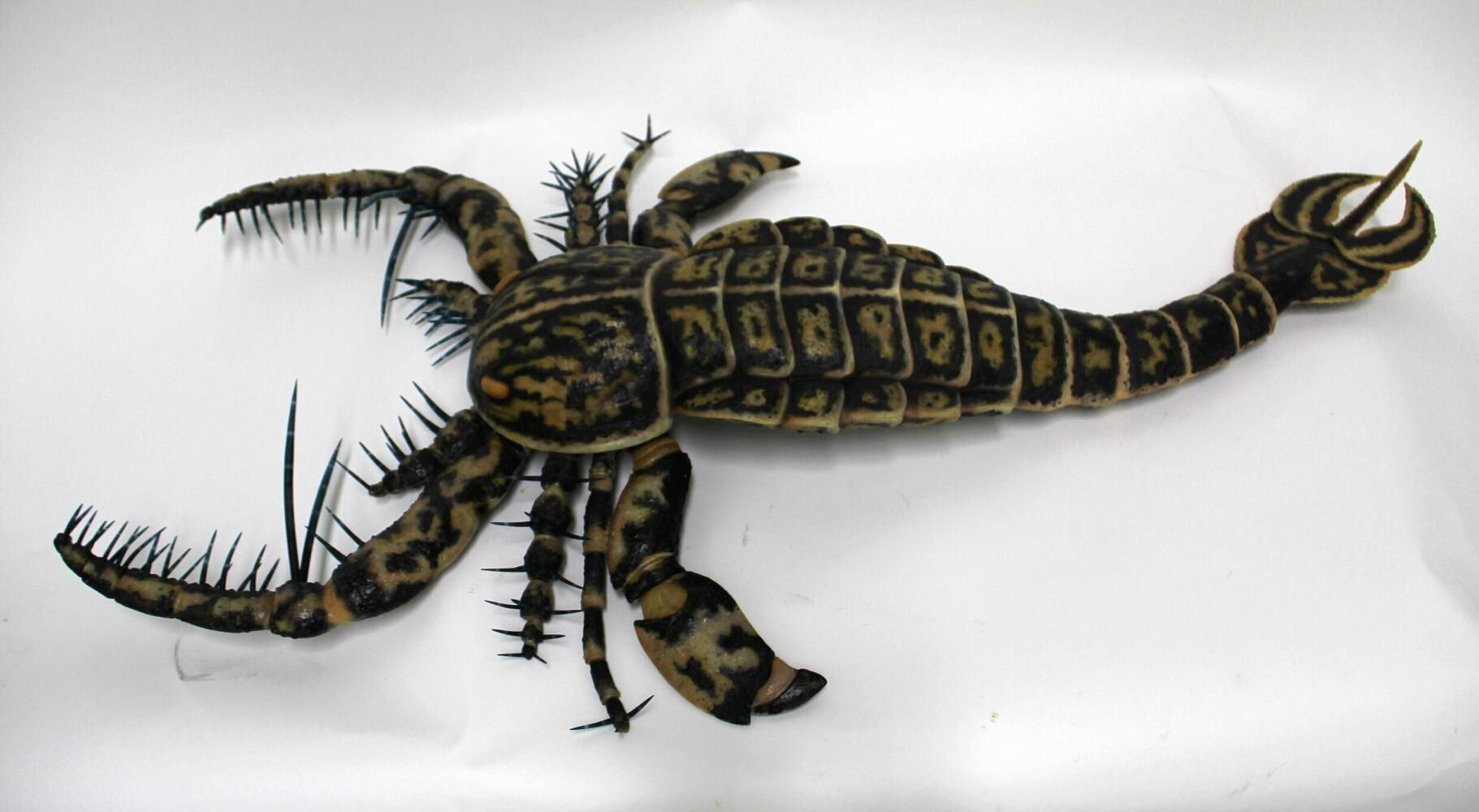 Eurypteridn extinct marine arthropod of a group occurring