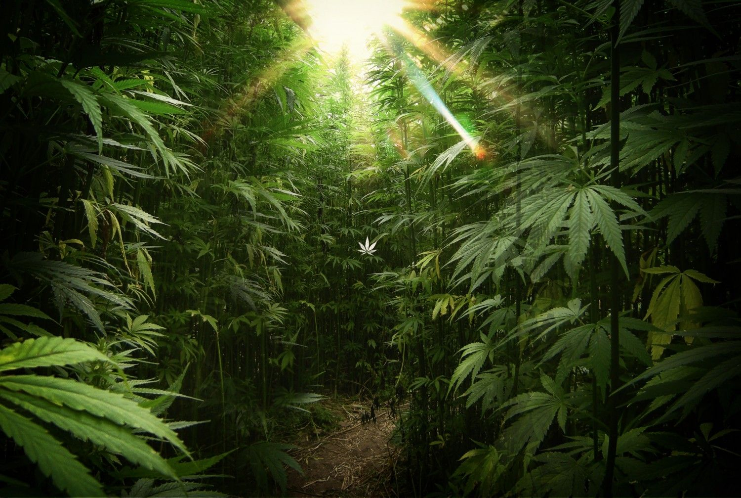 Live Weed Wallpapers 420 | The Best HD Weed Wallpaper Backgrounds | many high times | Pinterest ...