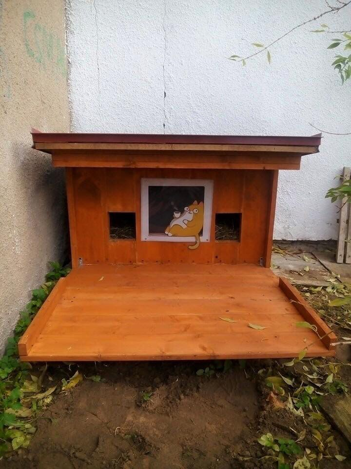 first build street cats house for riga cats cats and kittens rh pinterest com