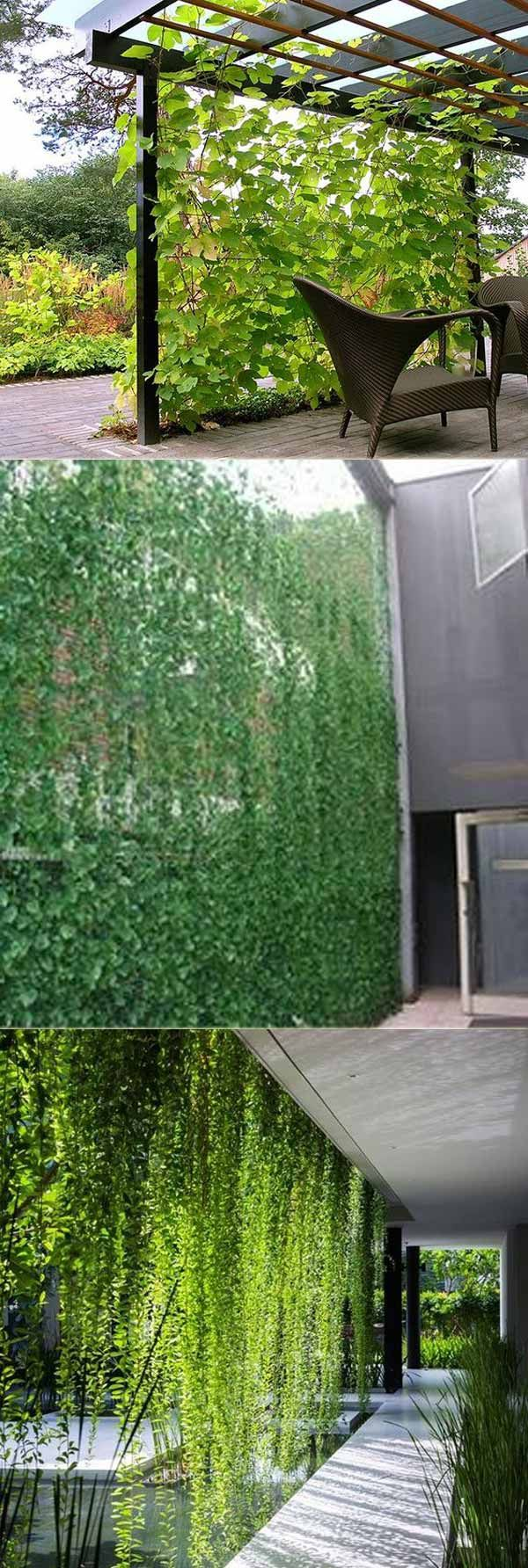 Vine Privacy Screen Can Make Your Patio Or Yard Get Privacy While