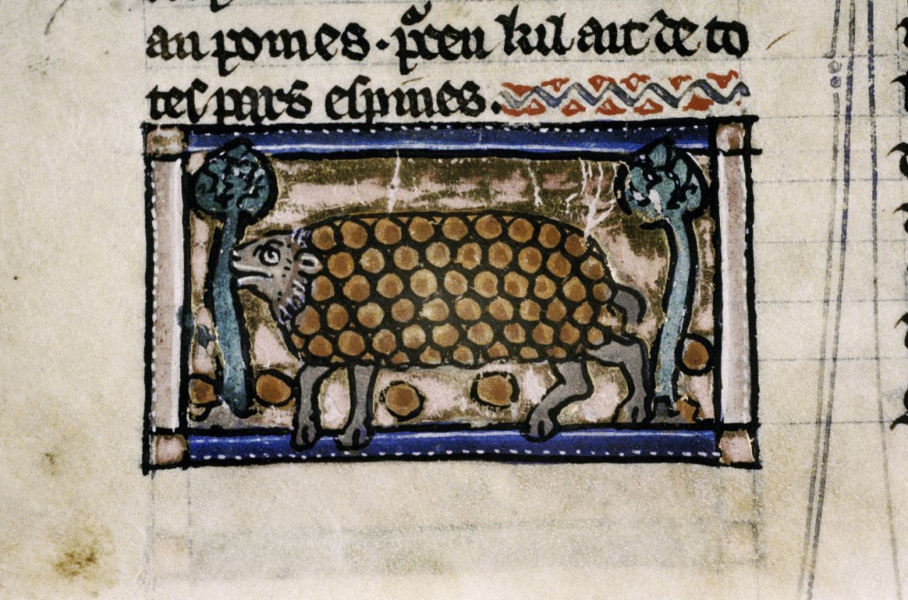 Manuscripts, Print, and All Manner of Books — bodleianlibs:   It's Hedgehog Day! Yes, it is a...