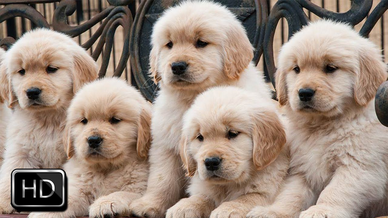 Cute Puppies Growing Up Puppies Cute Animals Dog Lovers