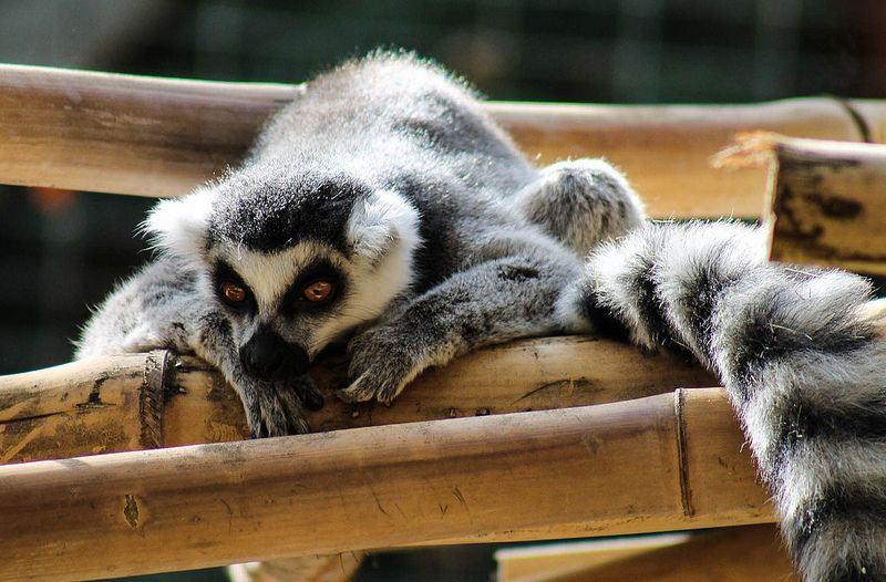 Animal Claws Creature Nature Zoo Farm