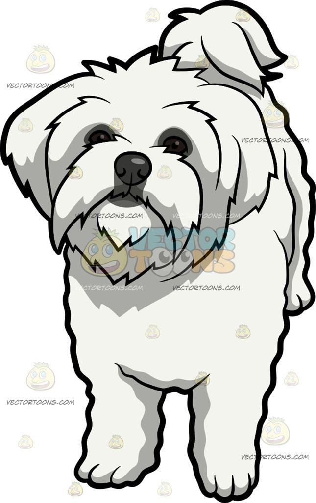 An Intrigued Maltese Dog | Pinterest | Maltese, Dog and Dog cards