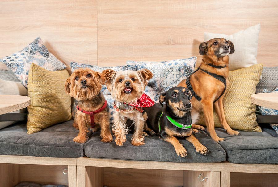 The best dogfriendly restaurants in Santa Barbara (With