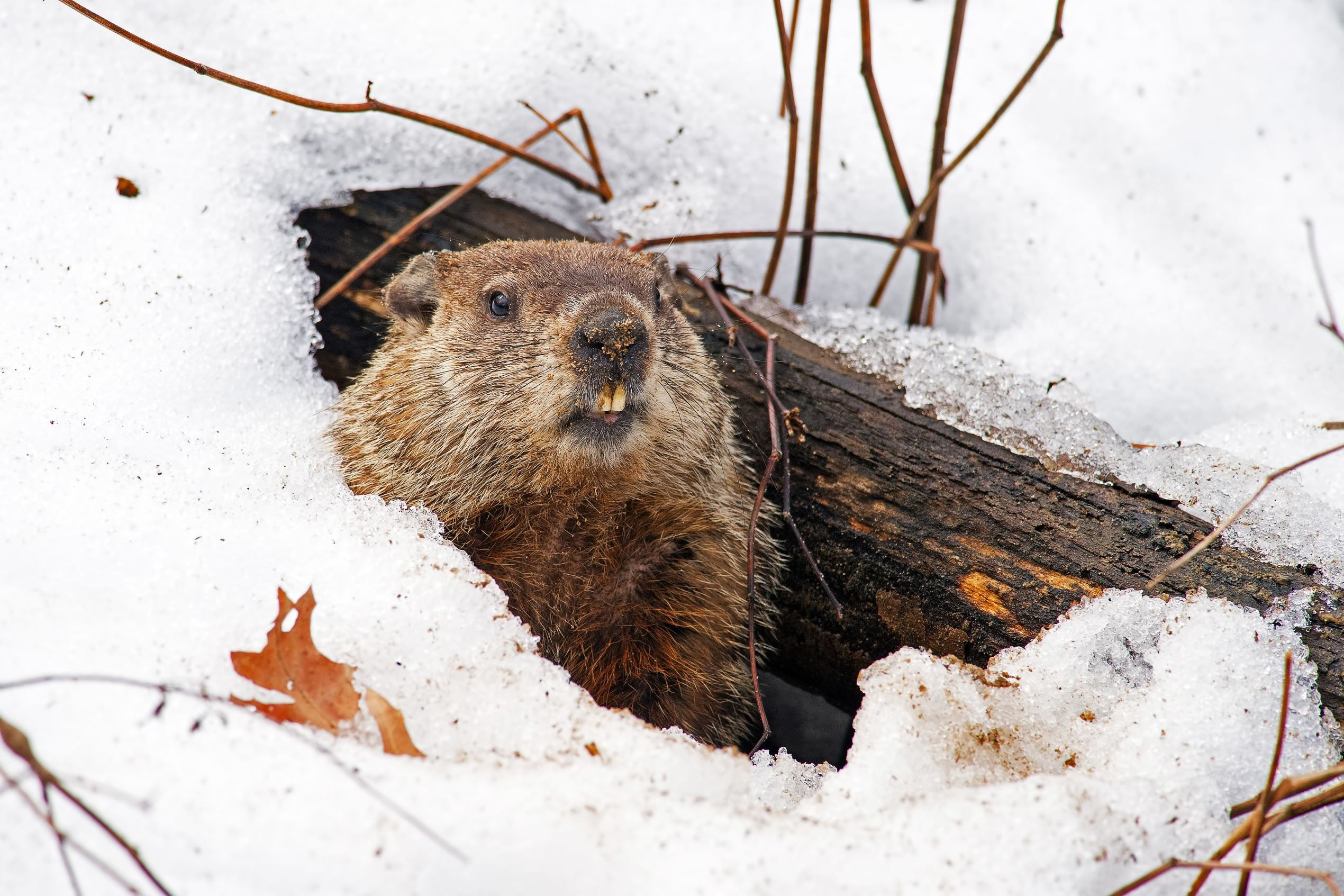 9 Adorable Facts About Groundhog Day