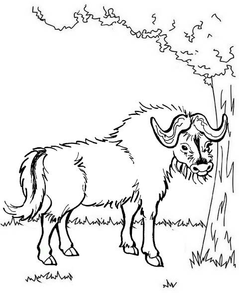 Pin By Cs Pengadaan On Yak Coloring Pages Farm Coloring Pages Coloring Pages Animal Coloring Pages